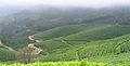 Munnar - views from Munnar (25).jpg