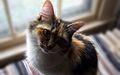 Mykittycat.jpg
