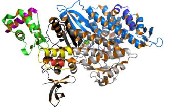 Myosin - Image: Myosin VI 2V26