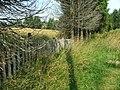NP TARA - Ograda i drvece.jpg