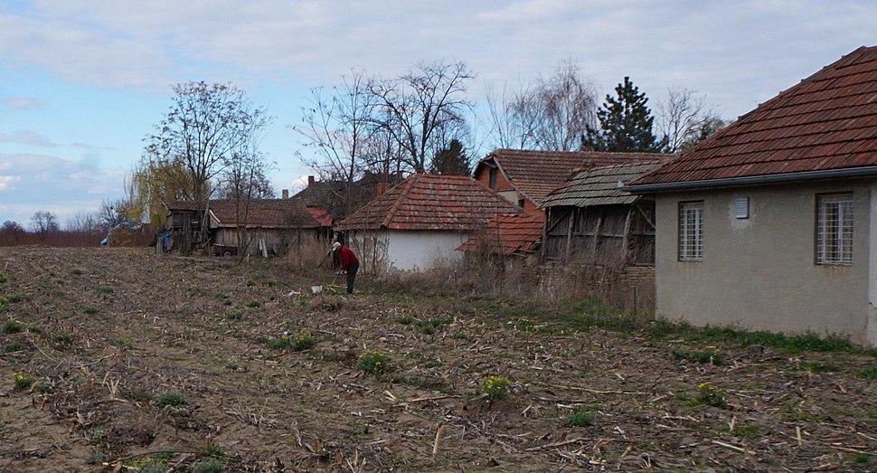 Na selu uvek ima šta da se radi, Nosa kod Hajdukova