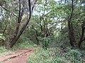Nairobi Arboretum Park 01.JPG