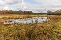 Natte plekken in open heide en ruig grasland. Locatie, natuurgebied Delleboersterheide – Catspoele 17.jpg