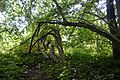 Naturschutzgebiet Haseder Busch - Im Haseder Busch (16).jpg