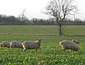Near Abbey Farm - geograph.org.uk - 1638123.jpg