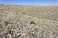 Near Border Hill - Flickr - aspidoscelis (1).jpg