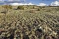 Near Cerro Verde - Flickr - aspidoscelis.jpg