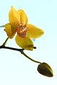 Need Spring! (4364244405).jpg