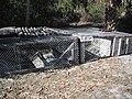 Nelson gator pit.JPG