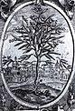 Niaśviž. Нясьвіж (1604).jpg