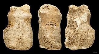 outil de pierre datant site de rencontres gratuit Kochi