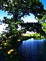 Oak - panoramio (13).jpg