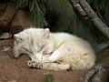 Oaklawn Farm Zoo, May 16 2009 (3539719196).jpg