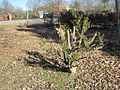 Oaklawn Garden 2011-01-29 Poplar Pike Germantown TN 74.jpg