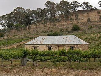 County of Stanley (South Australia) - Cottage among grape vines at Penwortham in the Hundred of Clare