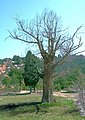 Om a l'ermita de la Consolació, Montroig de Tastavins, Matarranya - panoramio.jpg