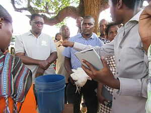 Sokoine University of Agriculture - Poulty demonstration at  Sokoine University of Agriculture