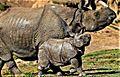 One Horn Rhino and Baby.jpg