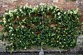 Orangery Garden, Apple Wall.jpg