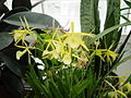 Orchid1875.JPG