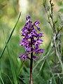 Orchideengewächs.jpg