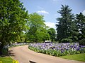 Orléans - parc floral (130).jpg