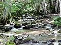 Ormanda Akarsu... - panoramio.jpg