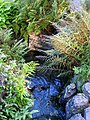 Oslo Botanical Garden - IMG 8958.jpg