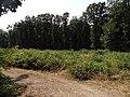 Přírodní park Škvorecká obora-Králičina - lesy východně od sídliště Rohožník a severně od Květnické studánky (3).JPG