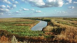 Azov reed bed, Kanevskoy District
