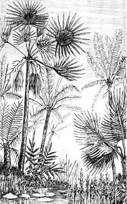 Palms and cycads as they might have appeared in the middle Tertiary PSM V16 D476 Principal palms and cycadeae of middle tertiary europe.jpg