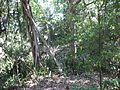 Palmetto FL Emerson Point Portavant Mound07.jpg