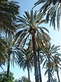 Palmiers-02-dequoi.jpg
