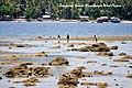 Pantai Inggandi di pesisir Teluk Manokwari, Kabupaten Manokwari Provinsi Papua Barat.jpg