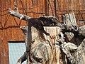 Panthera pardus.001 - Zoo Aquarium de Madrid.JPG