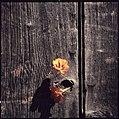 Paolo Monti - Serie fotografica - BEIC 6355565.jpg