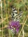 Papillon près de l'église de Saint-Martin de Laives.jpg