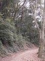 Parc de Vallvidrera 174-7456 IMG.JPG