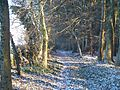 Path in the wood - geograph.org.uk - 1671668.jpg