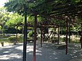Pergola of wisteria floribunda in Munakata Grand Shrine (Hetsu Shrine).JPG