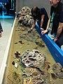 Pet a fish (8611682014).jpg