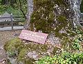 Petrified Forest - Stierch - A.jpg