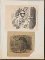 Phoenicopterus antiquorum - 1700-1880 - Print - Iconographia Zoologica - Special Collections University of Amsterdam - UBA01 IZ17600007.tif