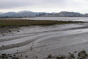 Ridgway's rail - Pickleweed Creek, the upper arm of Richardson Bay looking toward Bothin Marsh