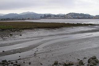 Bay mud Type of soil formed by sedimentation in estuaries