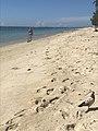 Pigeon sur la plage de Flic en Flac - 2018-02-14.JPG