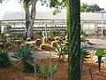 PikiWiki Israel 5286 cactus garden in ramat-gan.jpg