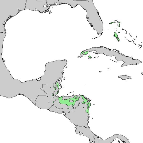 600px-Pinus_caribaea_range_map_1.png