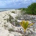 Playa Palancab. Cozumel - panoramio (2).jpg