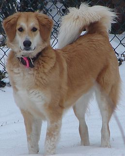 Mongrel Dog with mixed breeds